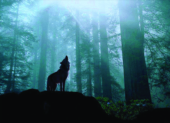 Tierra de Lobos de Nicholas Evans